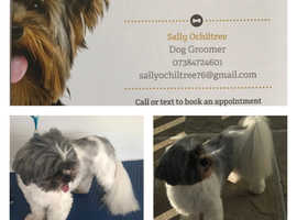 For all your dog's grooming needs call Sally's k9cuts  Brentwood Essex