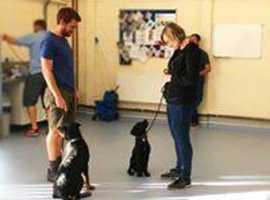 Dog Obedience Training - Rookie Classes
