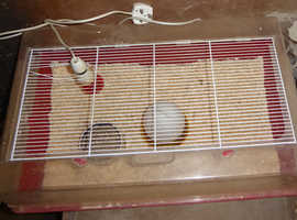 HEATED CHICK BROODER REARER