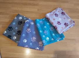 Kitten blanket bundle