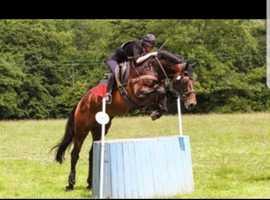 Sports Horse Stallions at Stud
