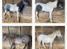 Lovley group of foals