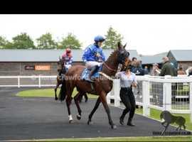 Alfie' 16.2hh Ex Racehorse