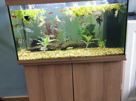 Fish Tank, Unit, Fish & Accessories