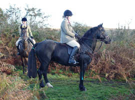 Penpont derry 14.2 hunting/competition pony