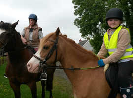 Welsh part bred 13.3 hh 10 yr old chestnut gelding.