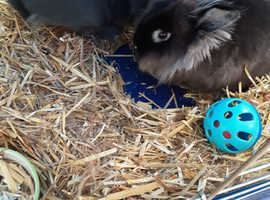 2 rabbits to rehome