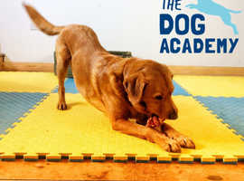 We offer puppy, agility, scentwork, gundog, socialisation and much much more...