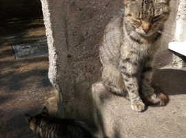 Tabby female cat