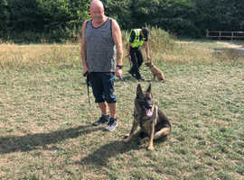 Pet dog training one to one