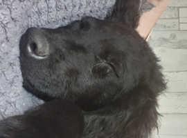 gorgeous 12 week old puppy