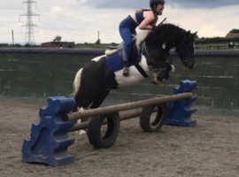 4yo mare, allrounder/ jumping pony