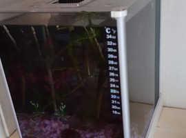 Cherry shrimp in 10 litre nano tank