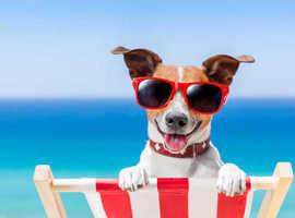 Doggy staycation.....