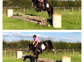 13.2HH MARE WITH SERIOUS POTENTIAL LOOKING FOR NEW HOME