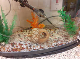 Tropical Fish in Telford | Pet Fish For Sale & Rehome - Freeads