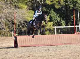 Sibon Rose: Talented Imported Young Horse