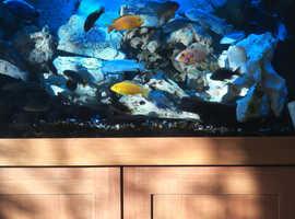 Aqua one fish tank full set up