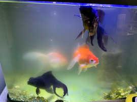 Goldfish re homing