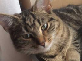 Missing cat Llantwit Major-Reward for safe return