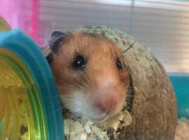 Ninja Hamster seeking new home
