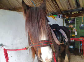 Gorgeous cob gelding Project OFFERS!!!!