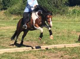 Competition pony