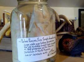 Specimen jar, museum quality
