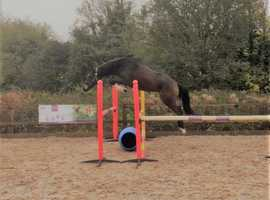 Super 4yr Old - BE Prospect