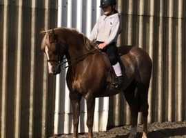 Fun and fast games/jumping pony