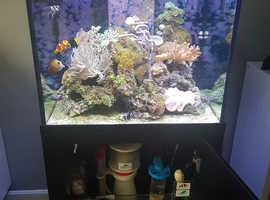 Marine Fish Tank set up