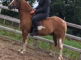 12.2hh project pony