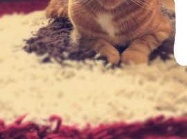 Missing ginger cat in swindon area