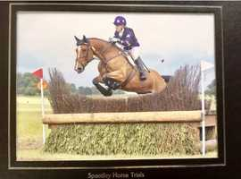 Stunning 17hands Class 1 Irish draught mare.