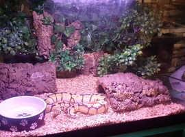 stunning female BumbleBee + setup