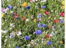 Wild flower seed - Bee Meadow (175g)
