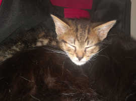 2 kittens available