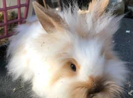 Gorgeous baby bunnies!