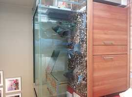 Yellow Belly terrapins with tank and storage.