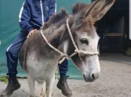 sweet kind donkey