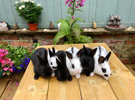 Adorable baby rabbits