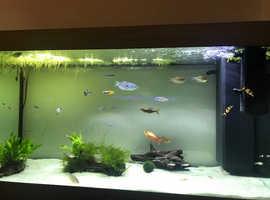 3 red, 2 boesemani, 2 blue rainbowfish