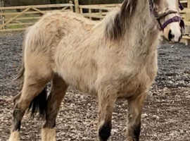 Yearling filly for sale