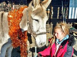 Stunning irish jenny donkey