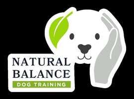 Award-Winning Dog Training Services