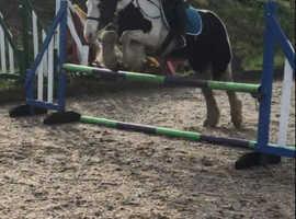 Willow 13.2 Cob mare