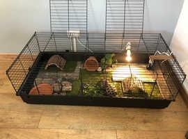 2 horsefield tortoise