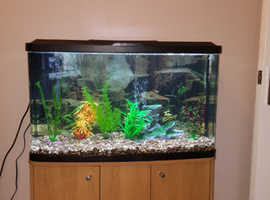 2 FT 6 CURVED FISH TANK