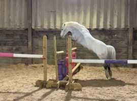 Perfect 12hh pony for sale