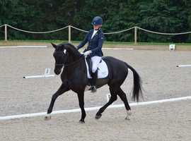Freelance Dressage Instructor and Rider